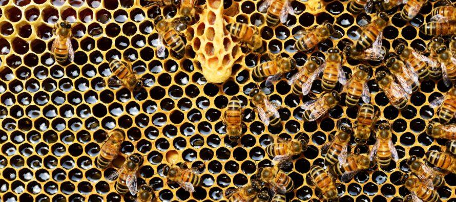 2019: il cambiamento climatico colpisce il Miele